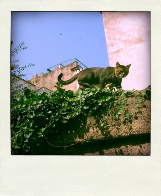 Cat on Wall in Calvi