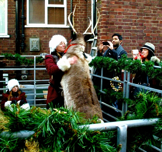 Reindeer Hugs